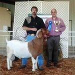 Overall Grand Champion Buck show 2 and Overall Res Grand Champion Buck in Show 1 in TN..