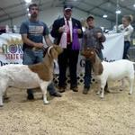 CEF Gretchen (L) wins Overall Reserve Grand Champion and 2BBT Stardust (R) wins Overall Grand Champion in both shows....