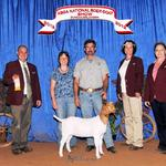 FNHR Snow Flake at the 2012 ABGA National Show - placed 8th in the 3 - 6 month (A) class.....